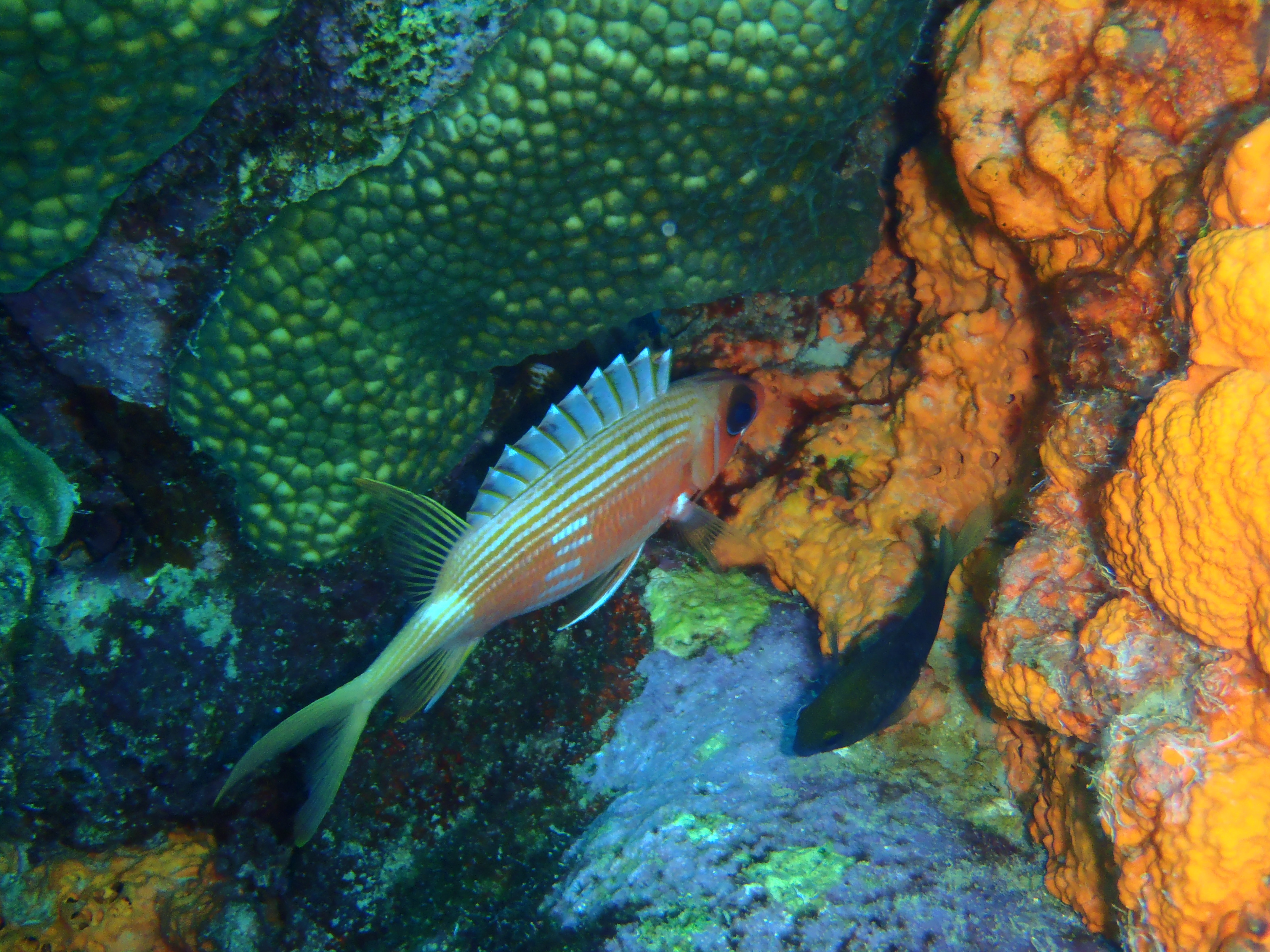 Aruba Diving - Squirrel Fish